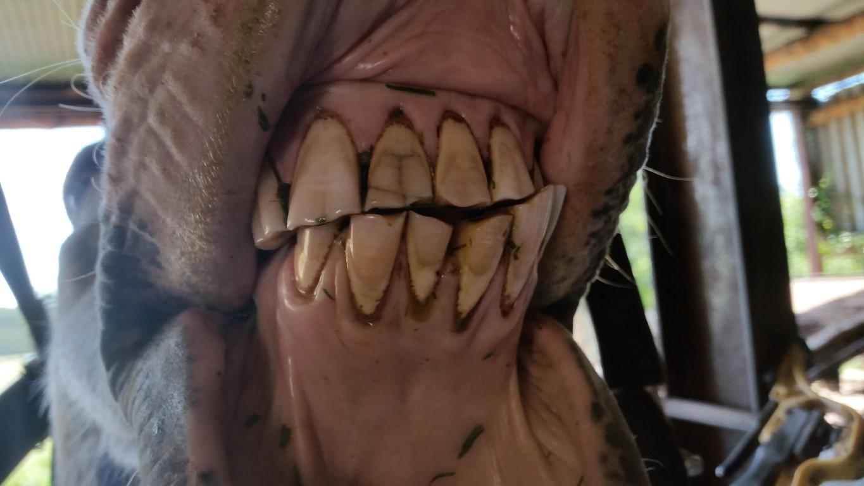 Case Studies - Equine Dentistry Services